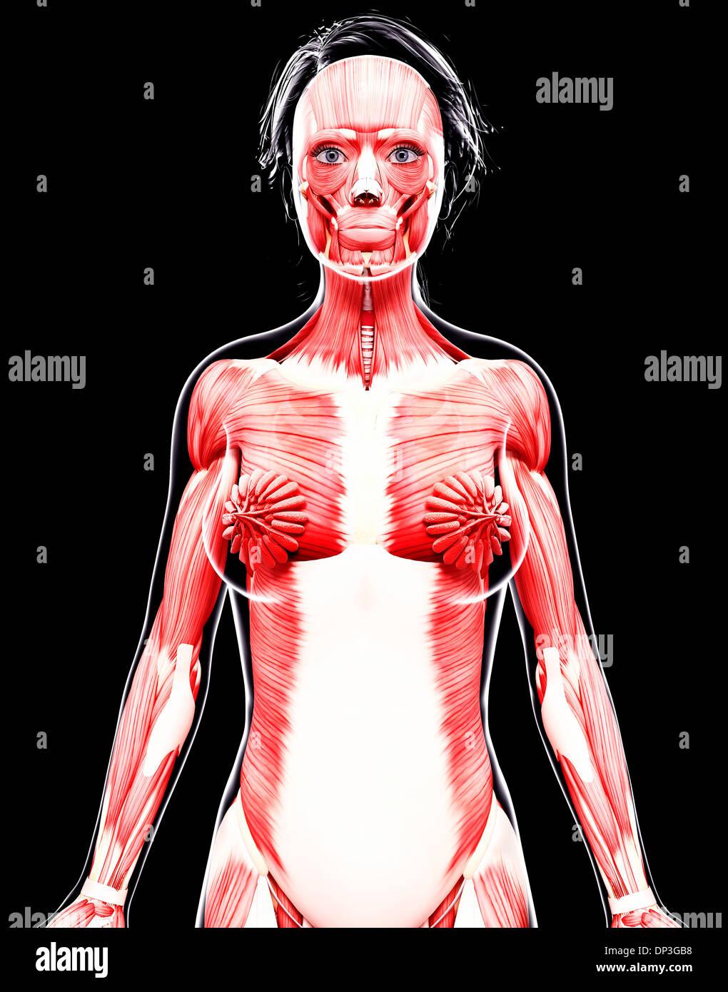 Fein Weibliche Anatomie Darm Fotos - Menschliche Anatomie Bilder ...