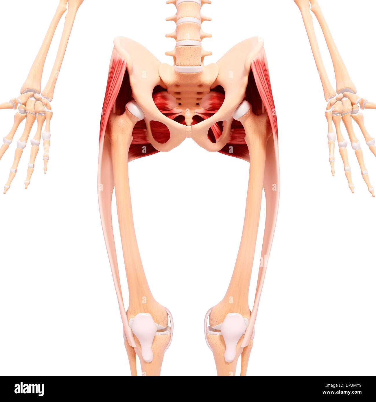 Iliotibial Stockfotos & Iliotibial Bilder - Alamy