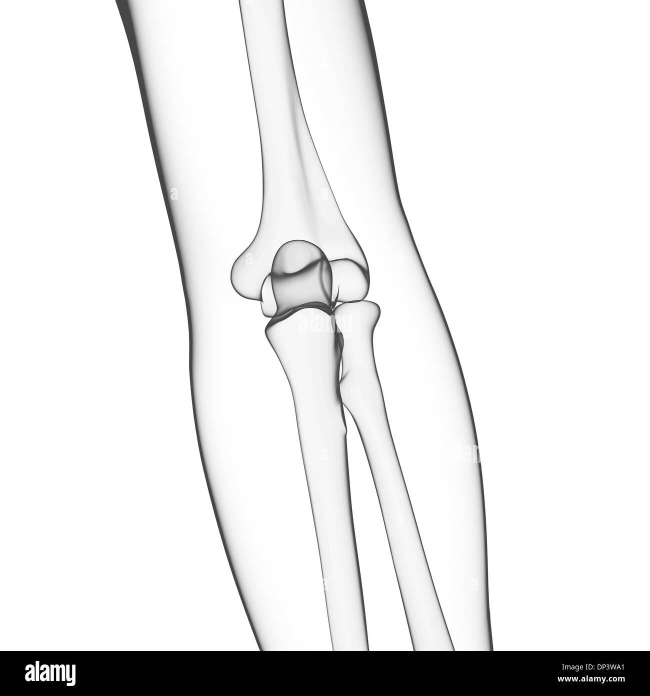 Nett Knochen Im Arm Fotos - Anatomie Und Physiologie Knochen Bilder ...