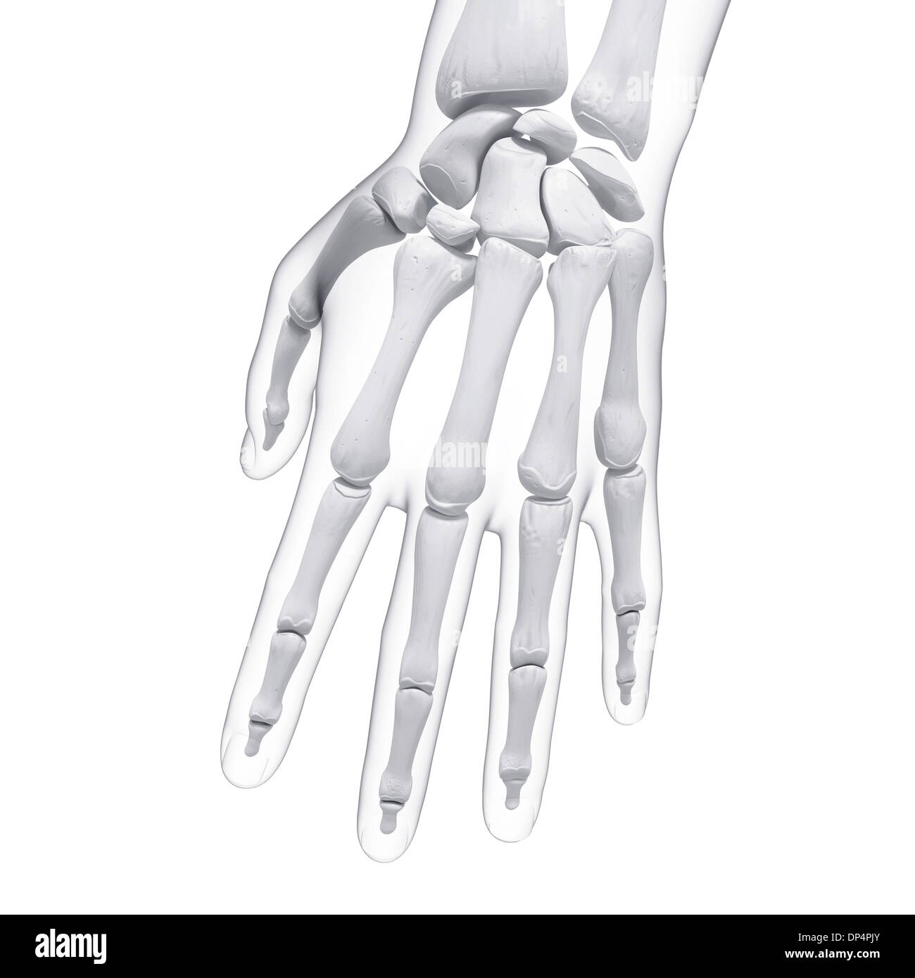 Großartig Menschliche Hand Knochenbau Fotos - Menschliche Anatomie ...