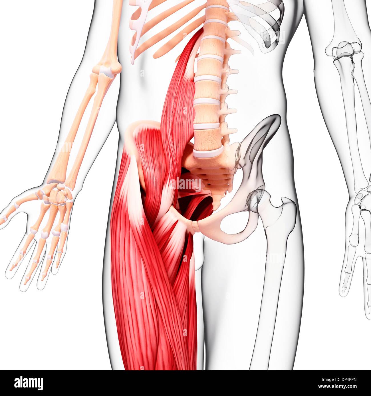 Gemütlich Handgelenk Muskeln Anatomie Galerie - Menschliche Anatomie ...