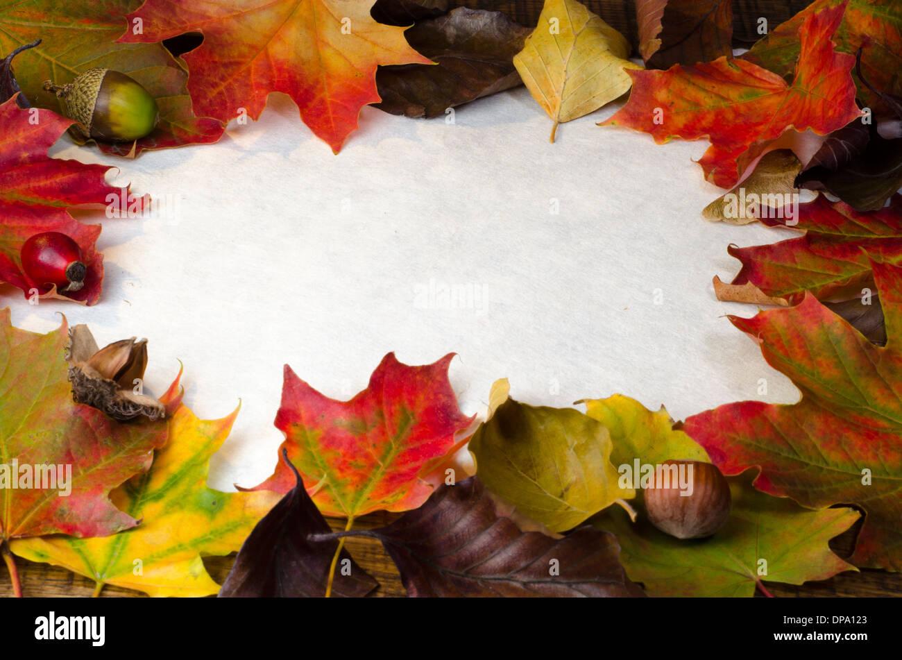 Ein Rahmen von bunten Herbst Blätter und Wind fallen, Nüssen und ...