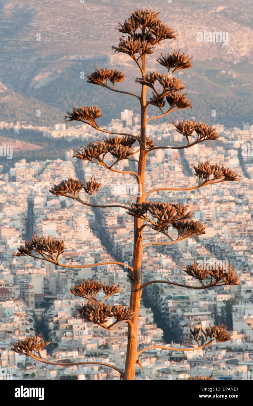 Ast vor der Stadt von Athen, die Hauptstadt von Griechenland zu sehen. Stockbild