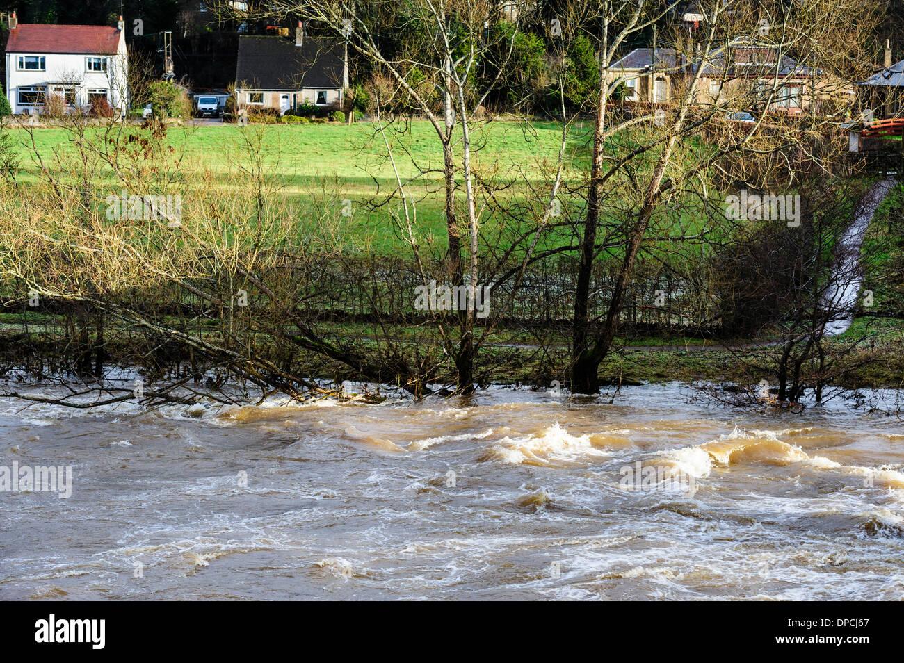 Der Fluss Clyde an Crossford, South Lanarkshire in Flut Stockbild
