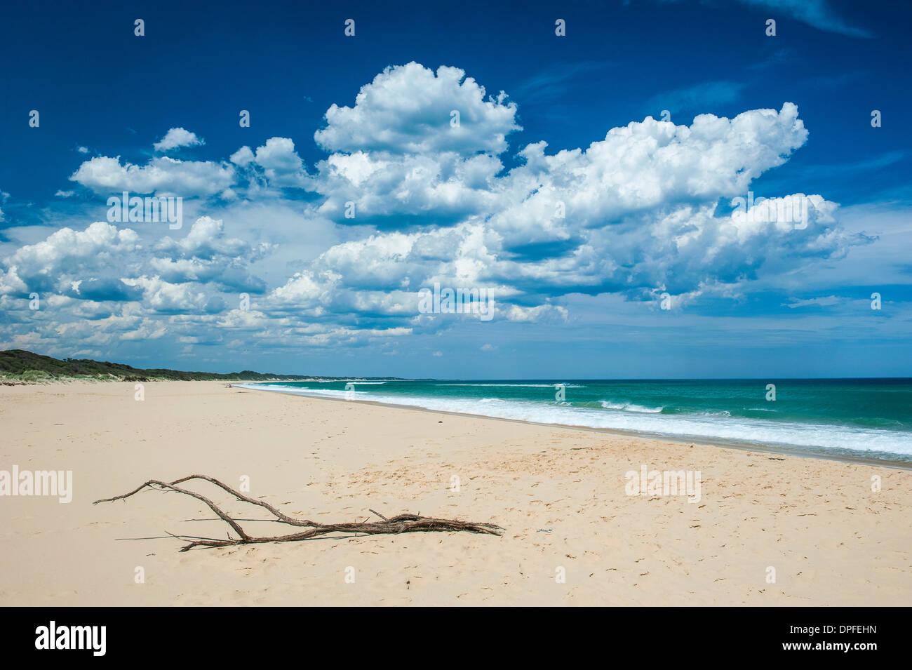Ast an einem Sandstrand in Cape Conran Coastal Park, Victoria, Australien, Pazifik Stockbild