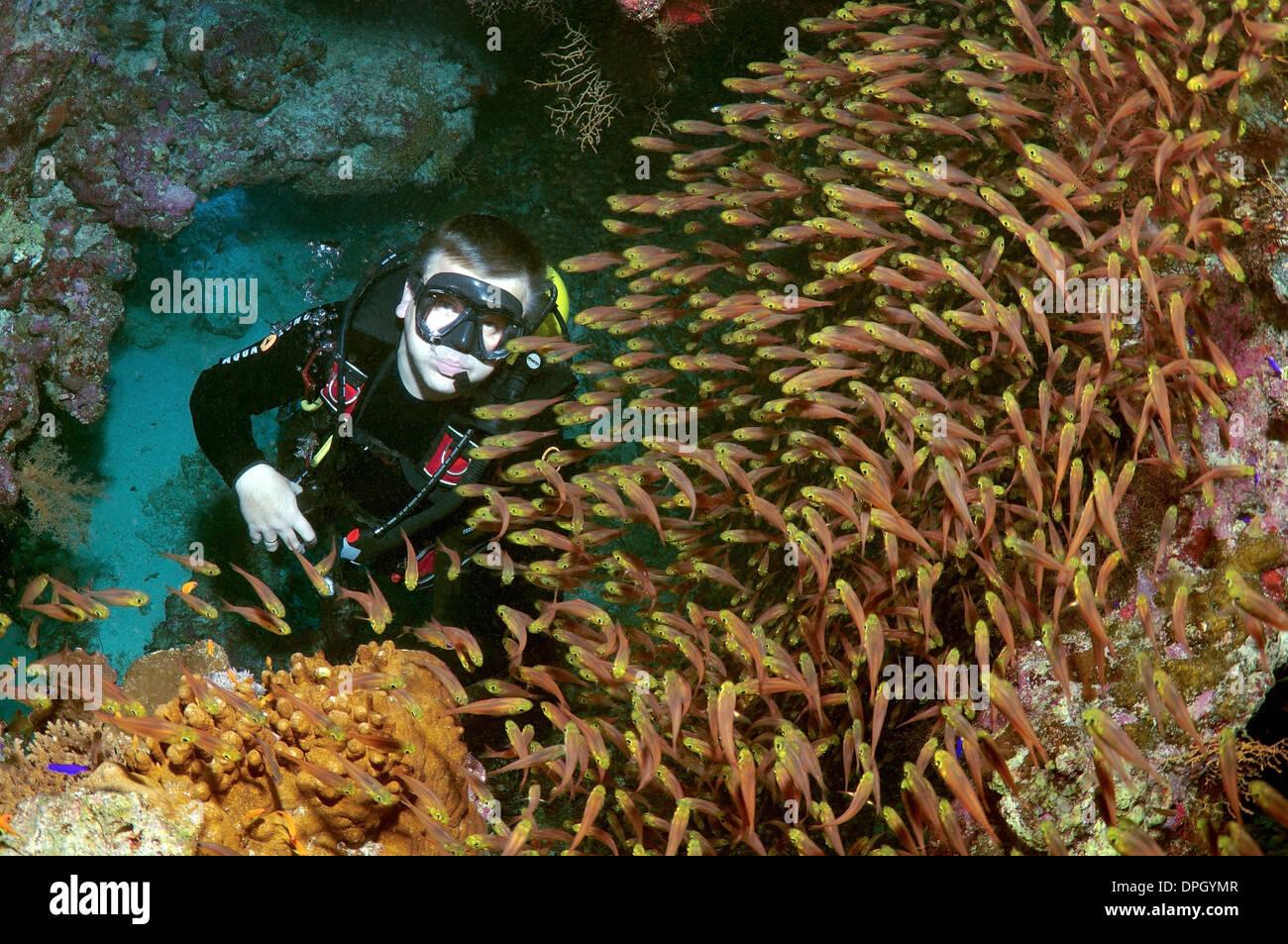 Golden Bullseye Stockfotos & Golden Bullseye Bilder - Alamy