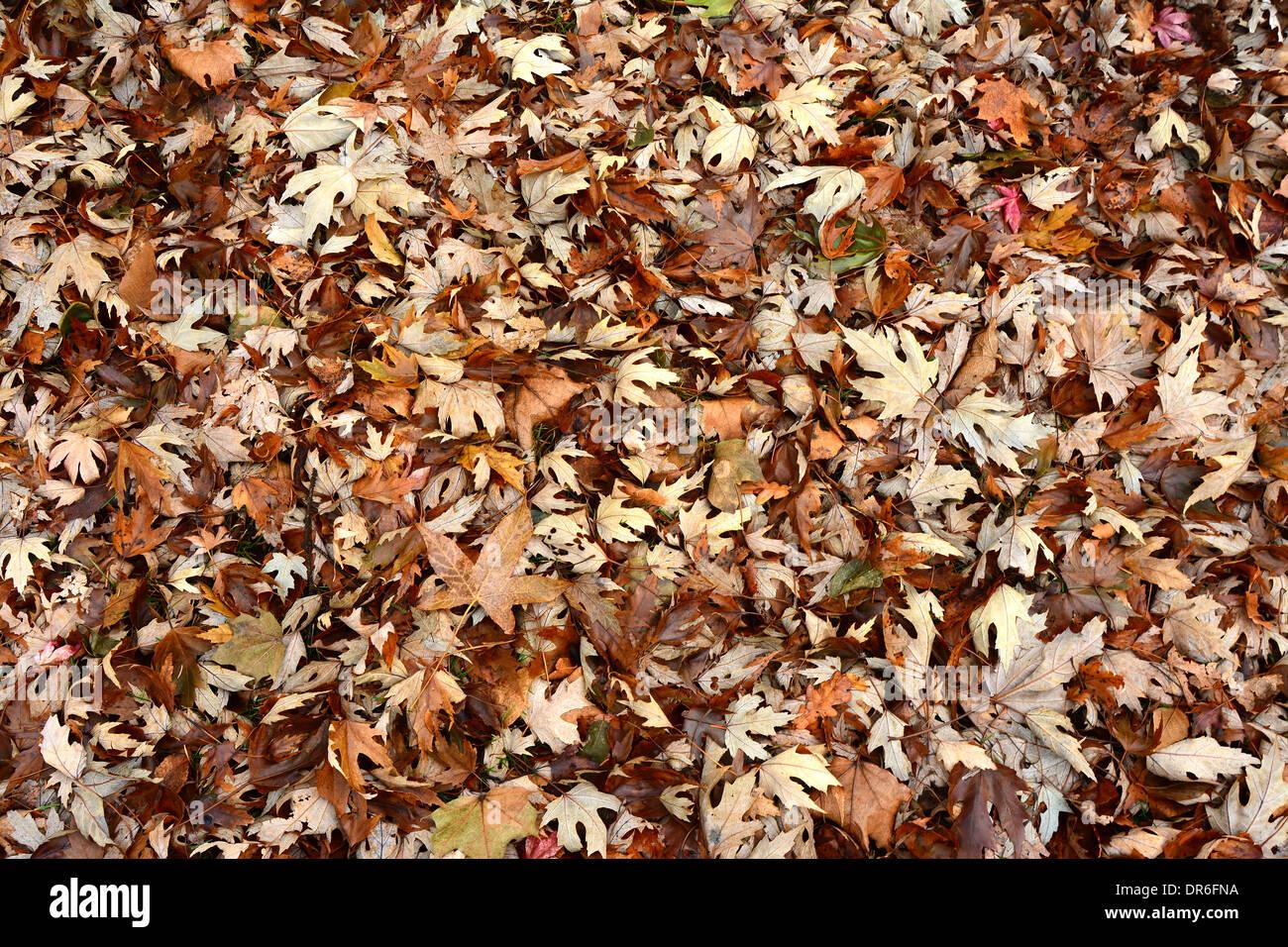 Teppich Herbst Laub bedeckt den Boden Stockbild