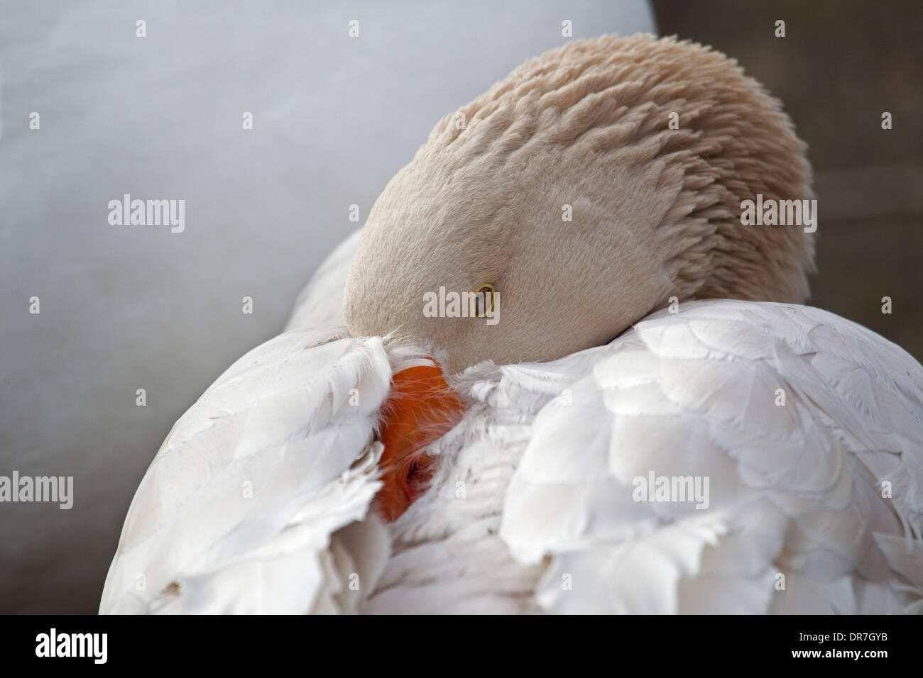 Haken-up orangefarbene Grafschaft ca Somali Dating-Website uk