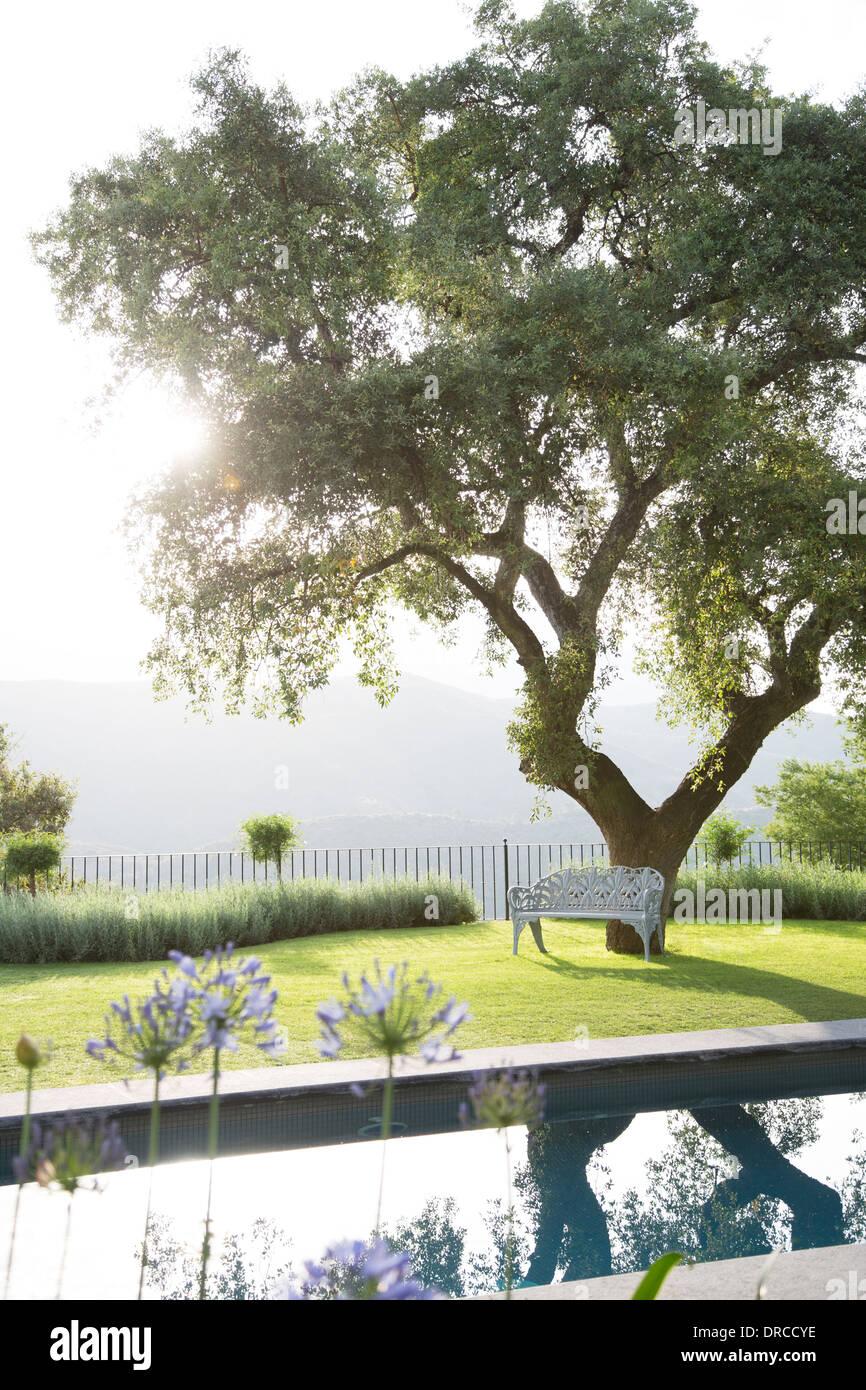 Bank unter Baum im ruhigen Garten Stockbild
