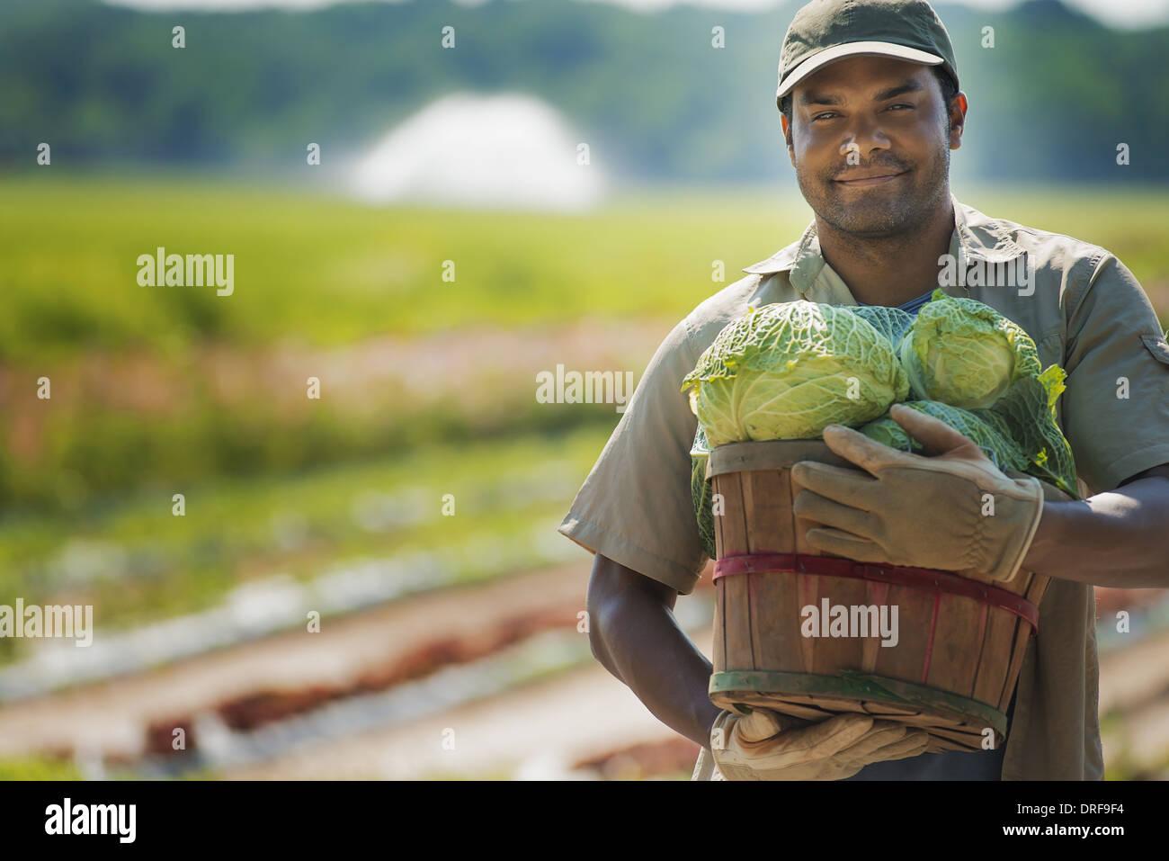New York State USA Mann mit Korb frisch geernteten Gemüse Stockbild