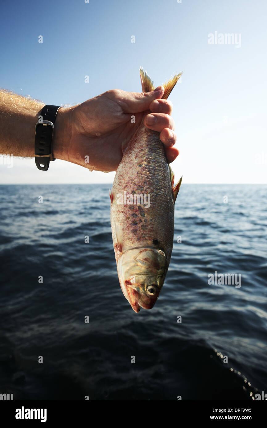 USA-Mann, der große Fisch am Schwanz über dem Wasser hält Stockbild