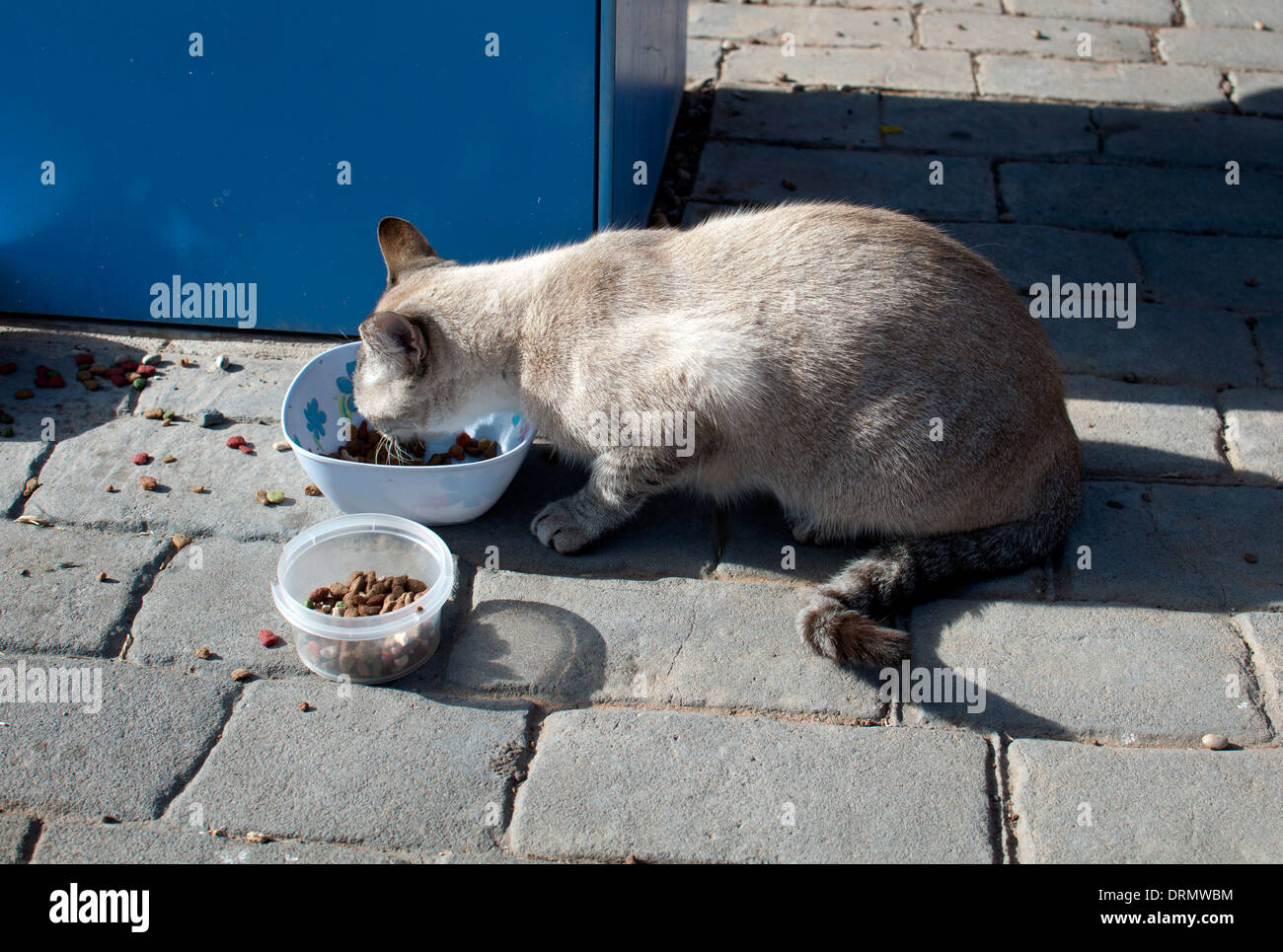 Streunende Katze essen löschte, Caleta de Fuste, Fuerteventura, Kanarische Inseln, Spanien. Stockbild