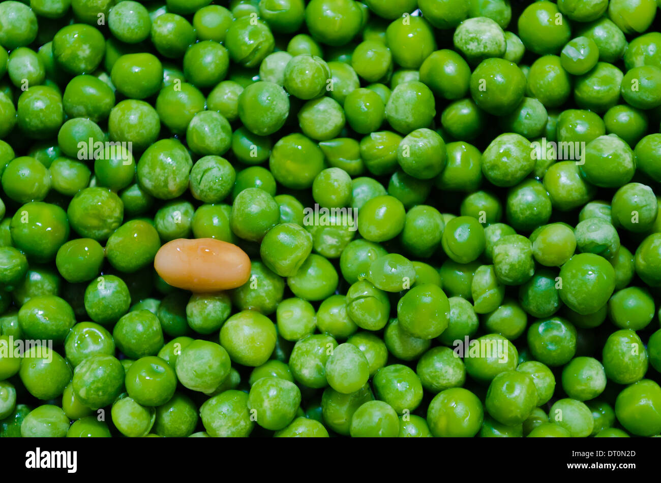 Gebackene Bohnen und Erbsen, Kuckucksei Stockbild