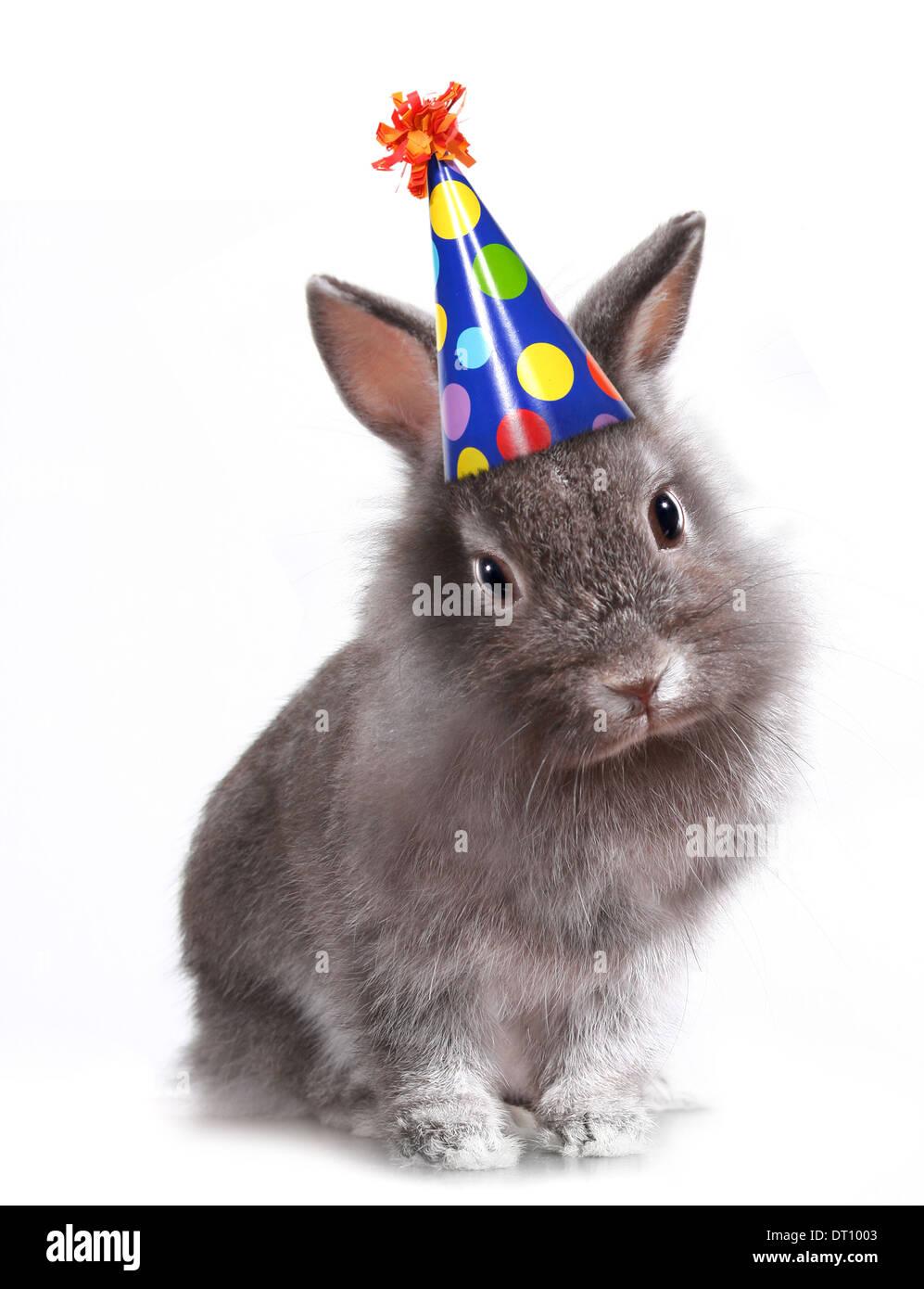 Lustiges Bild Ein Hase Einen Geburtstag Hut Stockfoto Bild