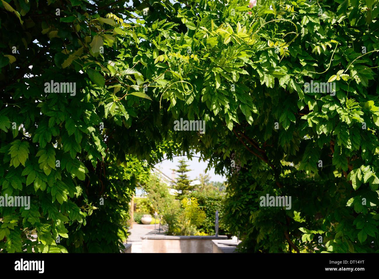 Glyzinien Abdeckung Bedeckt Bogen Torbogen Garten Gartenarbeit