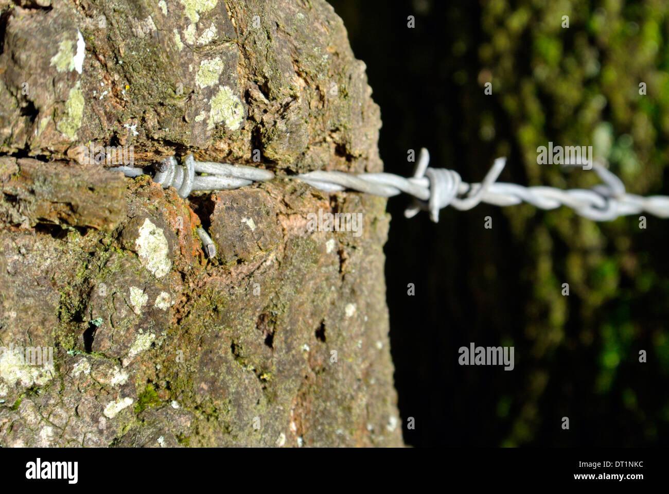 Fantastisch Stacheldraht Wunden Fotos - Die Besten Elektrischen ...