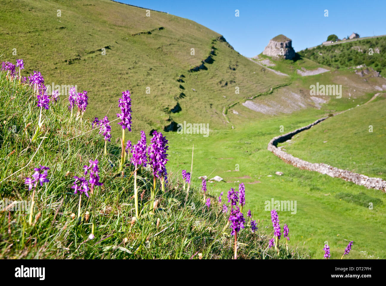 Frühe lila Orchideen & Peter Stein, Cressbrook Dale, Peak District National Park, Derbyshire, England, UK Stockbild
