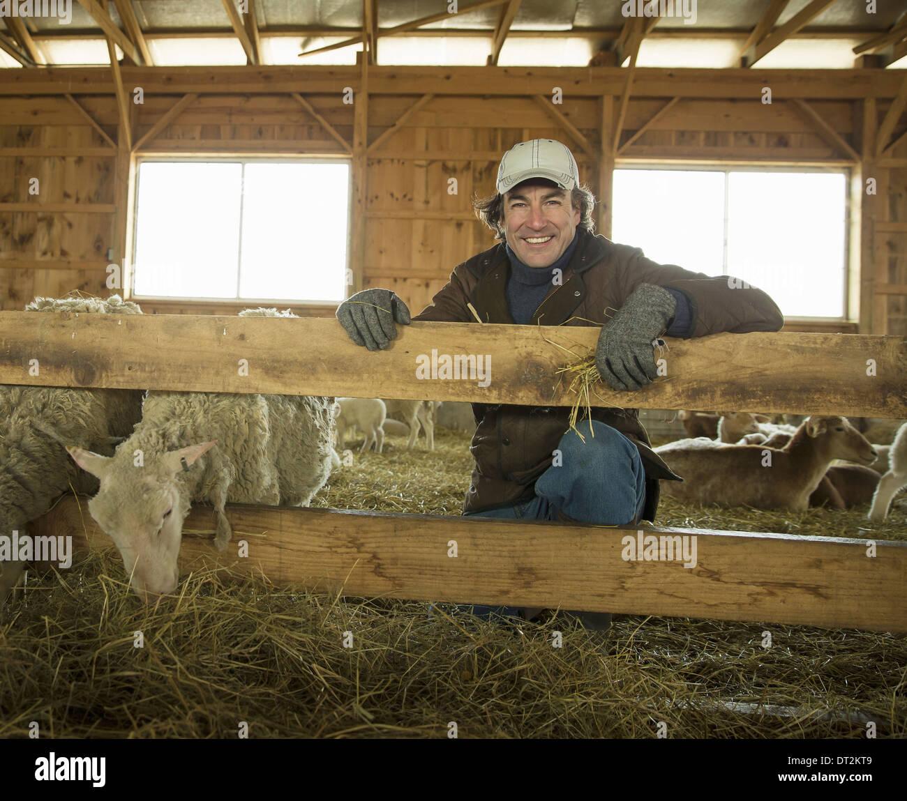 Ein Bio-Bauernhof im Winter im kalten Frühling New York Staat A Familie arbeiten, Fürsorge für die Bauern Vieh und Schafe in einen Stift Stockbild
