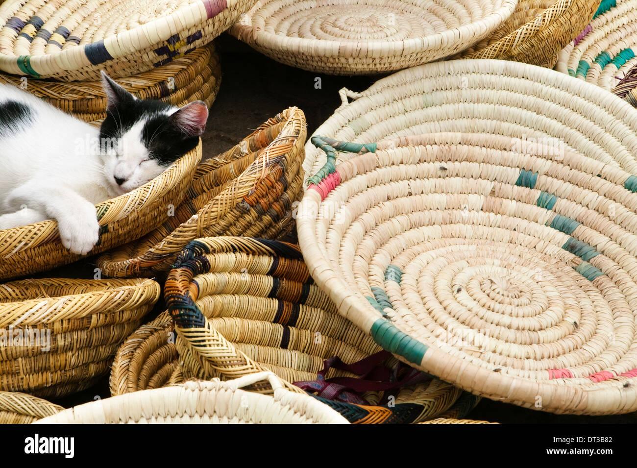 Eine Katze schläft in Körbe zum Verkauf auf dem Markt. Marokko, Afrika, Cat, Felis catus Stockbild