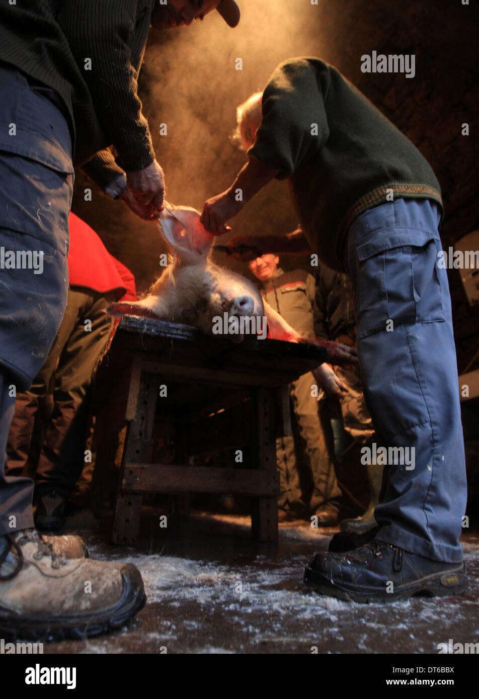 Traditionelle Art und Weise dem Schwein im kleinen Dorf in Lozère Südfrankreich Stockbild