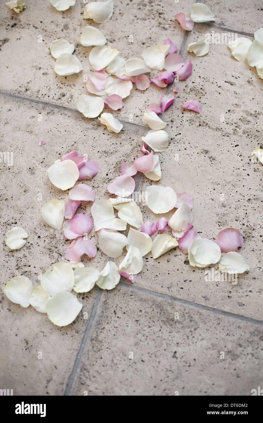 Frische Bio-Konfetti, getrocknet natürliche rosa Rosenblüten auf dem Boden. Traditionelle Hochzeit Brauch. Stockbild