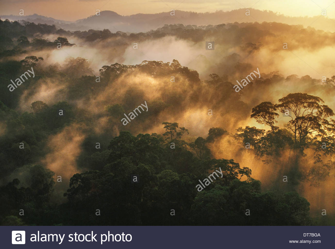 Nebligen Regenwald im Morgengrauen Borneo Borneo Stockbild