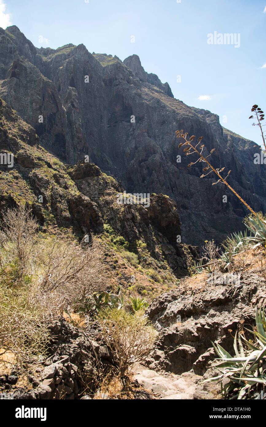 Masca Schlucht, Teneriffa, Kanarische Inseln, Spanien Stockbild