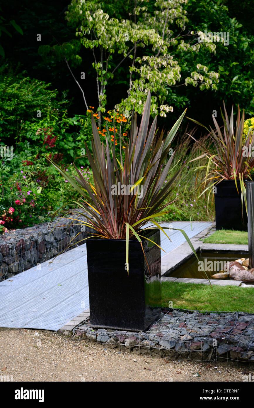 Phormium schwarze Kreuzotter Neuseeland Flachs Laub Blätter dunkel lila aufrecht Container wächst Stockfoto