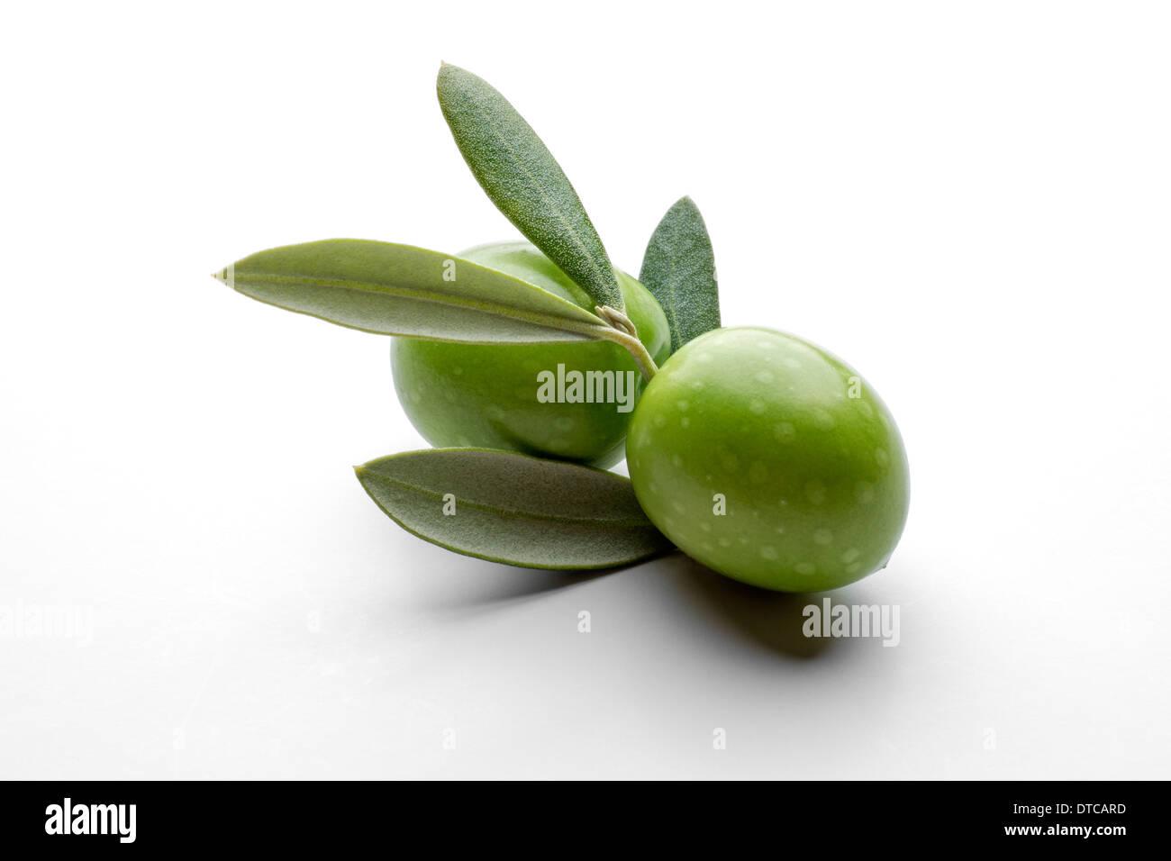 Olive Branch Oliven Panoramas de Rama de olivo Stockbild
