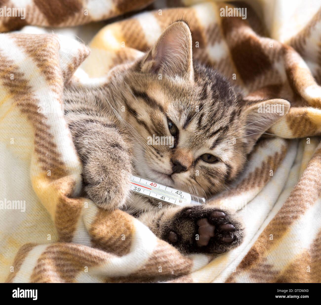 Kranken Kätzchen liegend mit hohen Temperaturen Stockbild