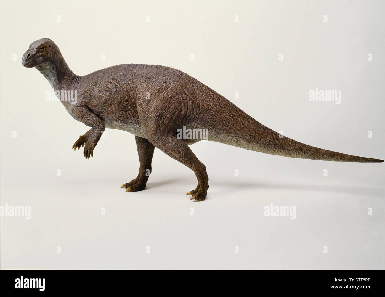 Iguanodon-Modell, der 1990er Jahre Stockbild