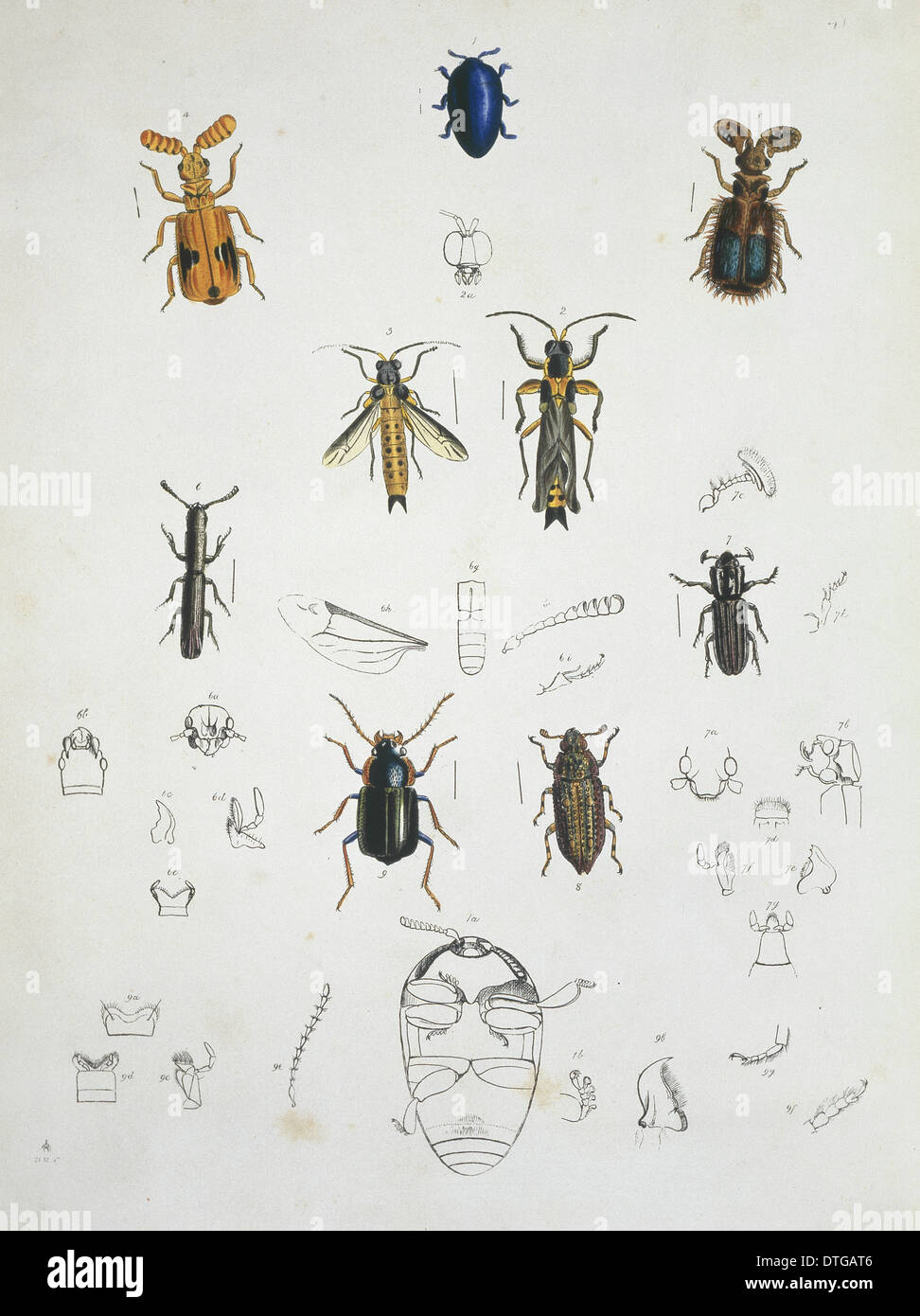 Illustration der Käfer Stockbild