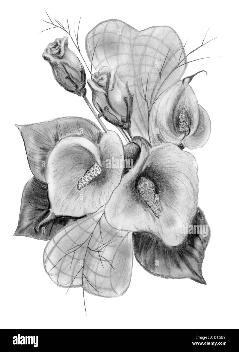 Blumenstrauß Bleistiftzeichnung Von Rosen Und Callas Isoliert Auf