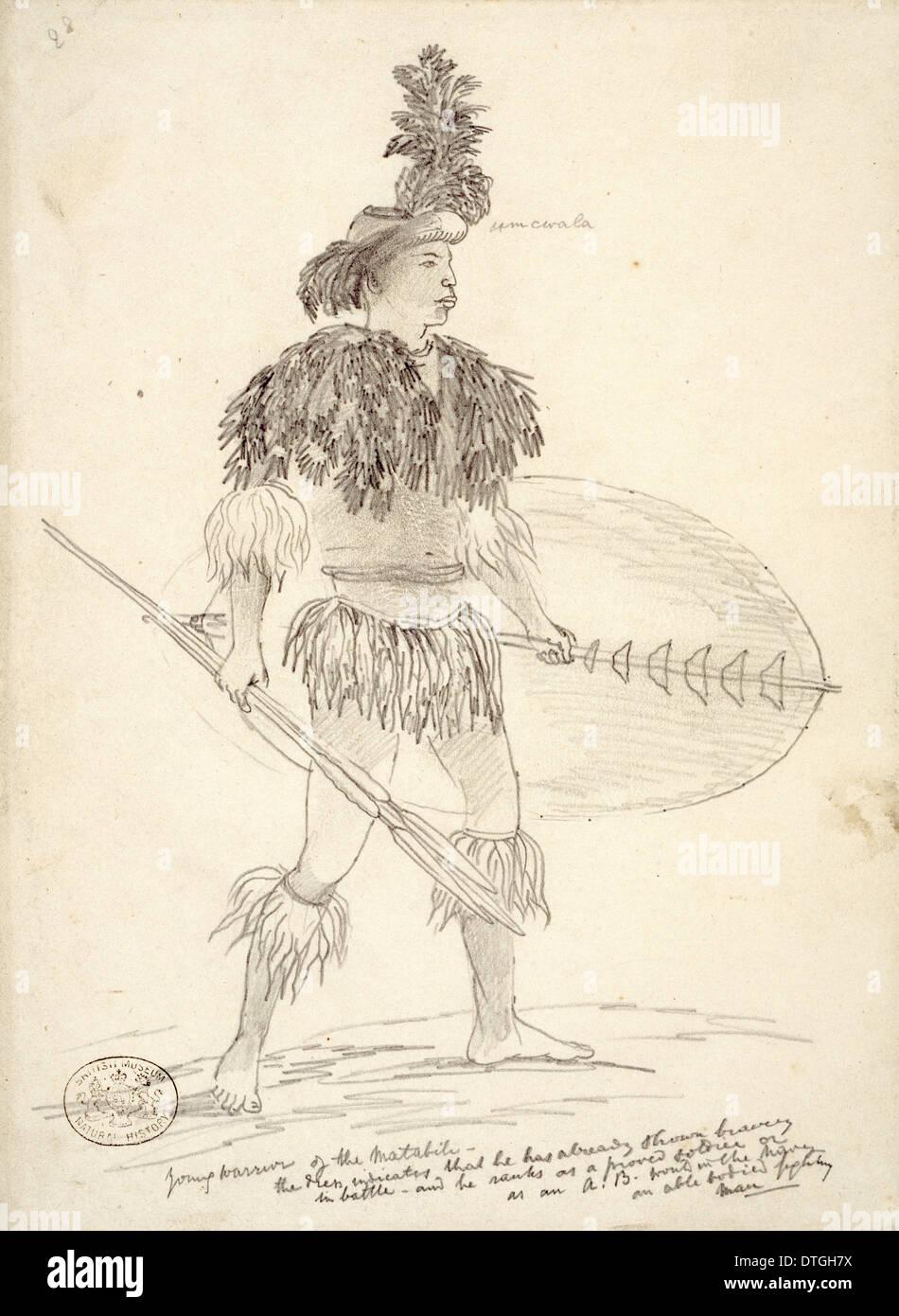 Young Matabili Krieger 1870-1871 Stockbild