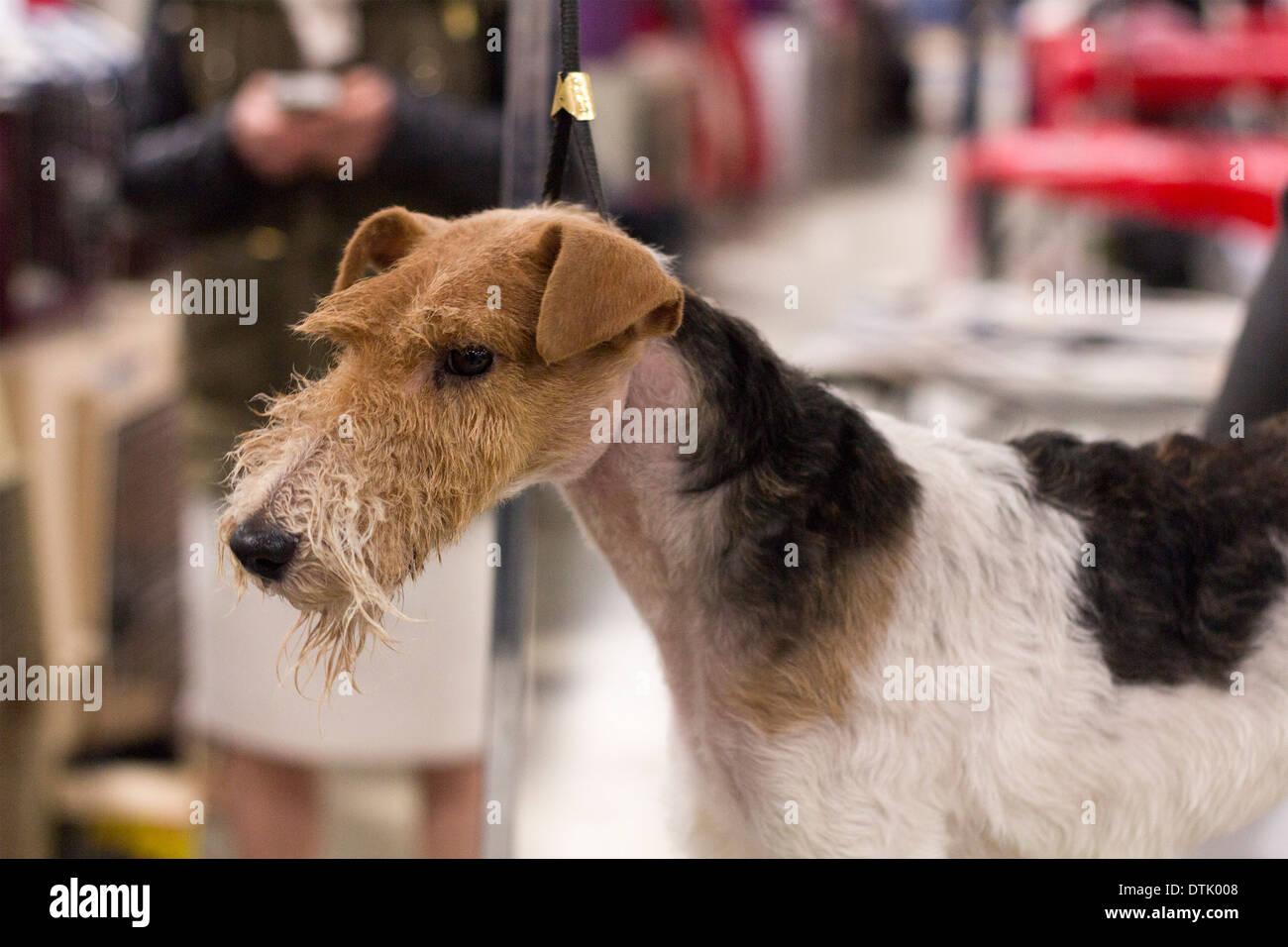 Grooming Table Canine Stockfotos & Grooming Table Canine Bilder - Alamy