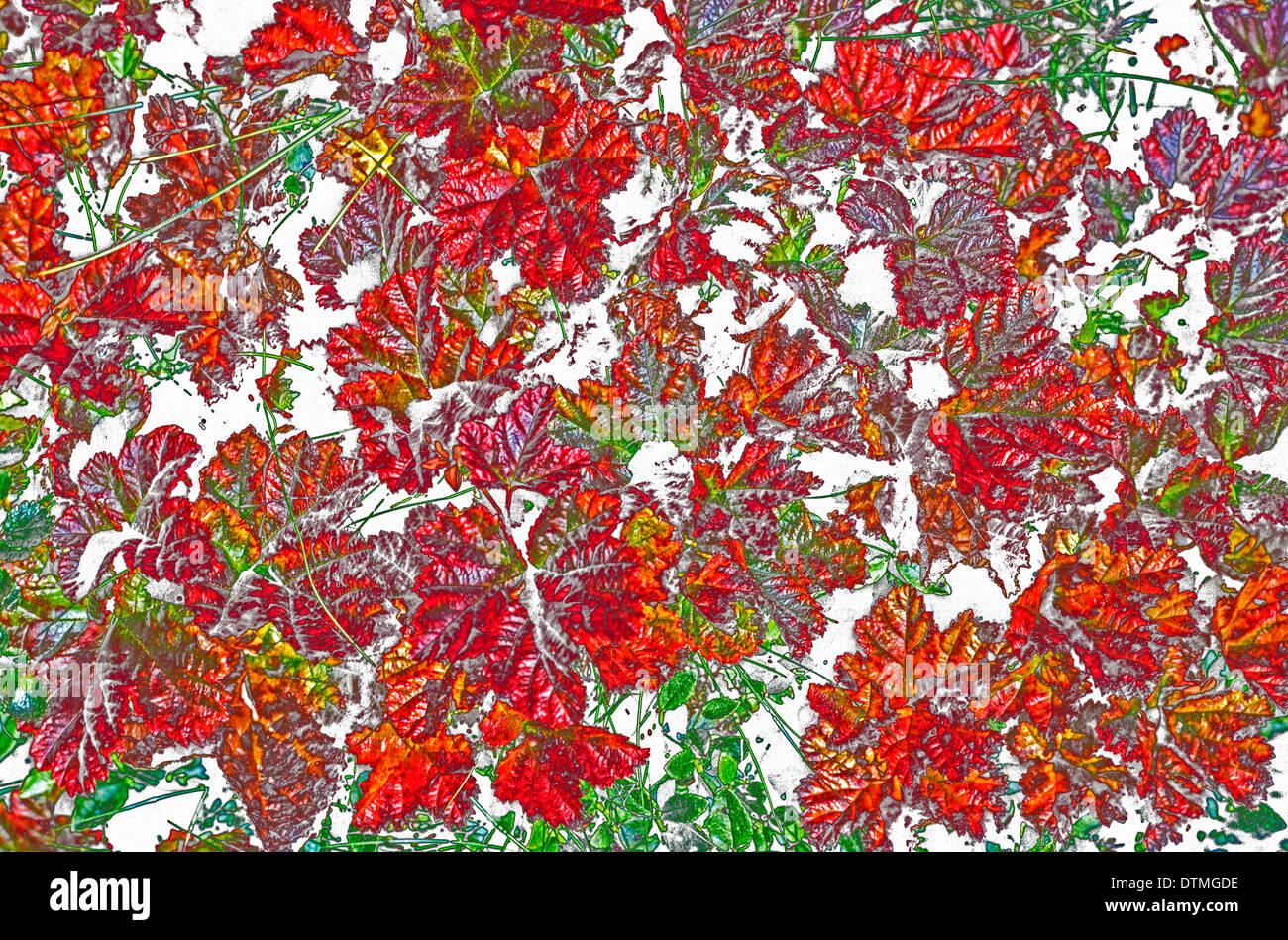 Ein Foto von bunten Herbstlaub, die auf den Boden gefallen ist Digital für einen auffälligen grafischen Effekt verändert worden. Stockbild