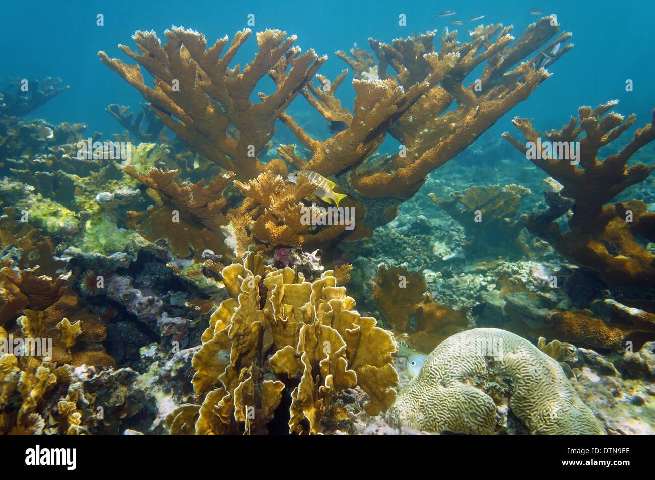 Unterwasserlandschaft in einem schönen Korallenriff, Atlantik, Bahamas-Inseln Stockbild