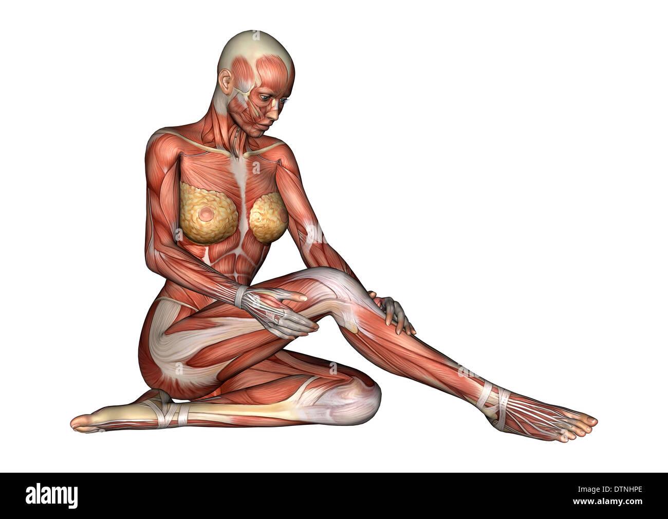 Ziemlich Frau Weibliche Anatomie Bilder - Anatomie Ideen - finotti.info
