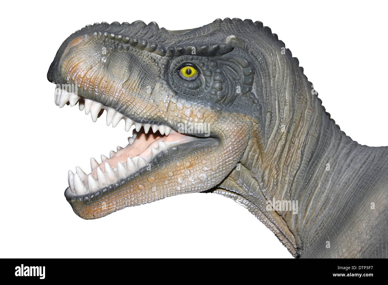 dinosaur mouth stockfotos dinosaur mouth bilder alamy. Black Bedroom Furniture Sets. Home Design Ideas