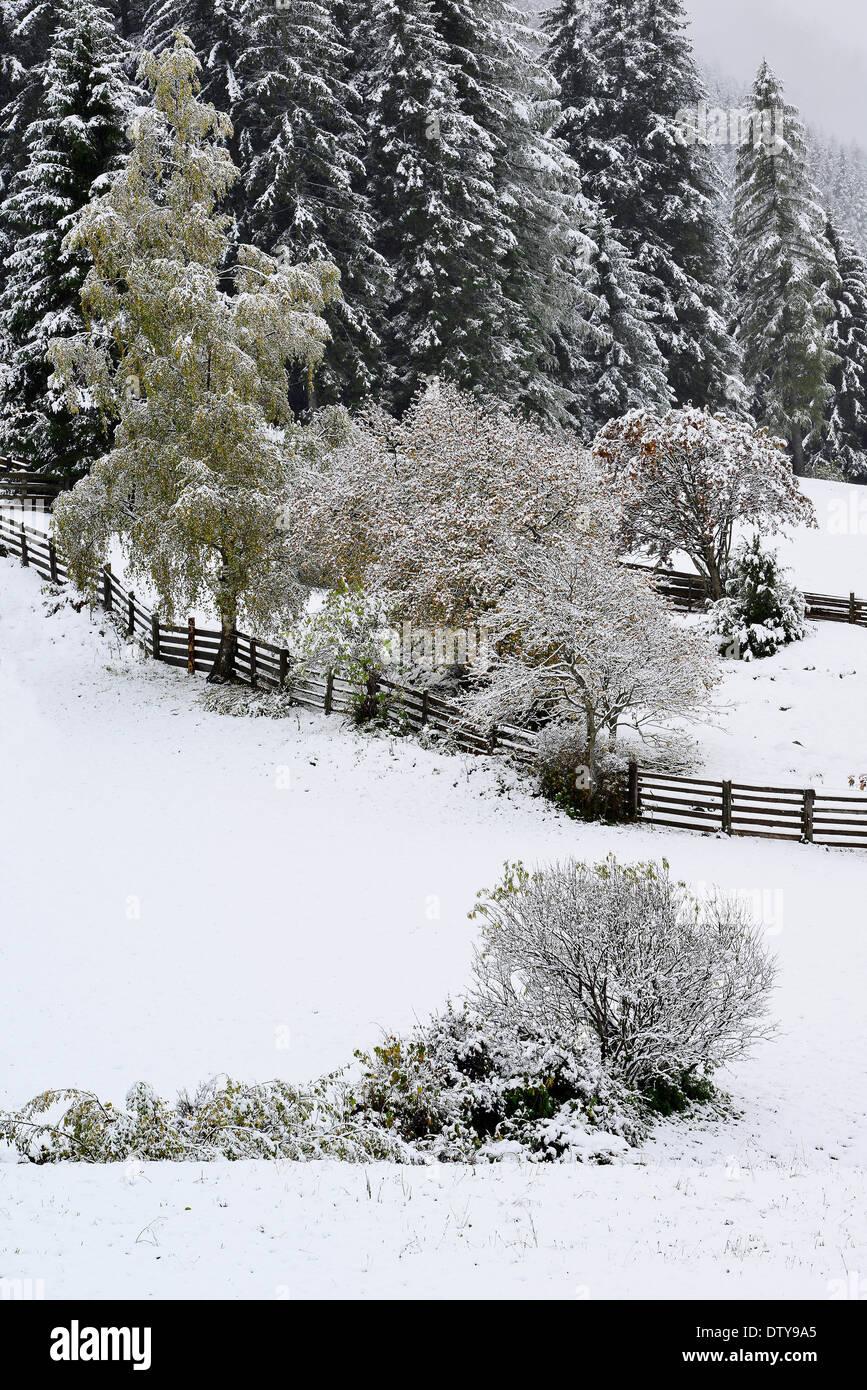 Gemütlich Winter Tier Färbung Blätter Fotos - Druckbare Malvorlagen ...