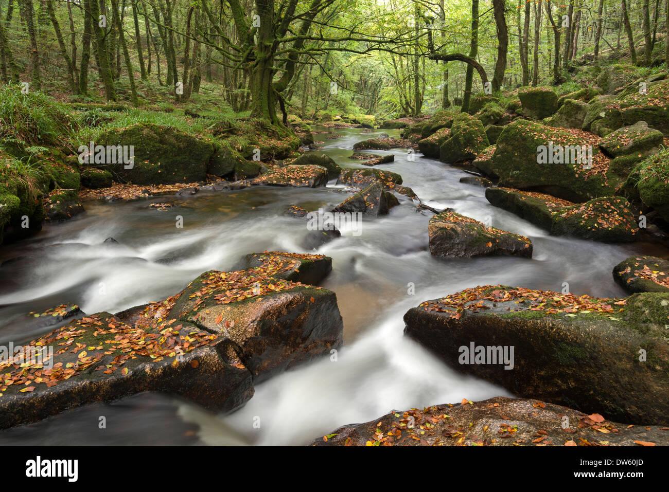 Fluss Fowey taumeln durch Felsen am Golitha fällt, Cornwall, England. Herbst (September) 2013. Stockbild