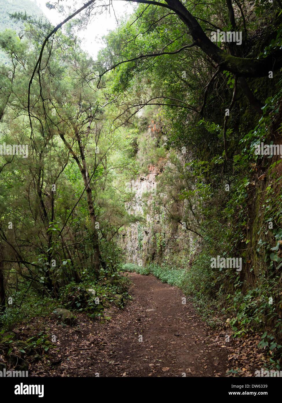 "Der Wanderweg zum Aussichtspunkt ""Mirador del Espigon Atravesado"" in der Laurel Wald Los Tiles / Los Tilos, La Palma Stockbild"