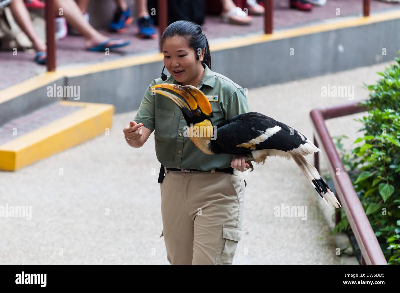 Vogelschau im Zoo von Singapur. Stockbild