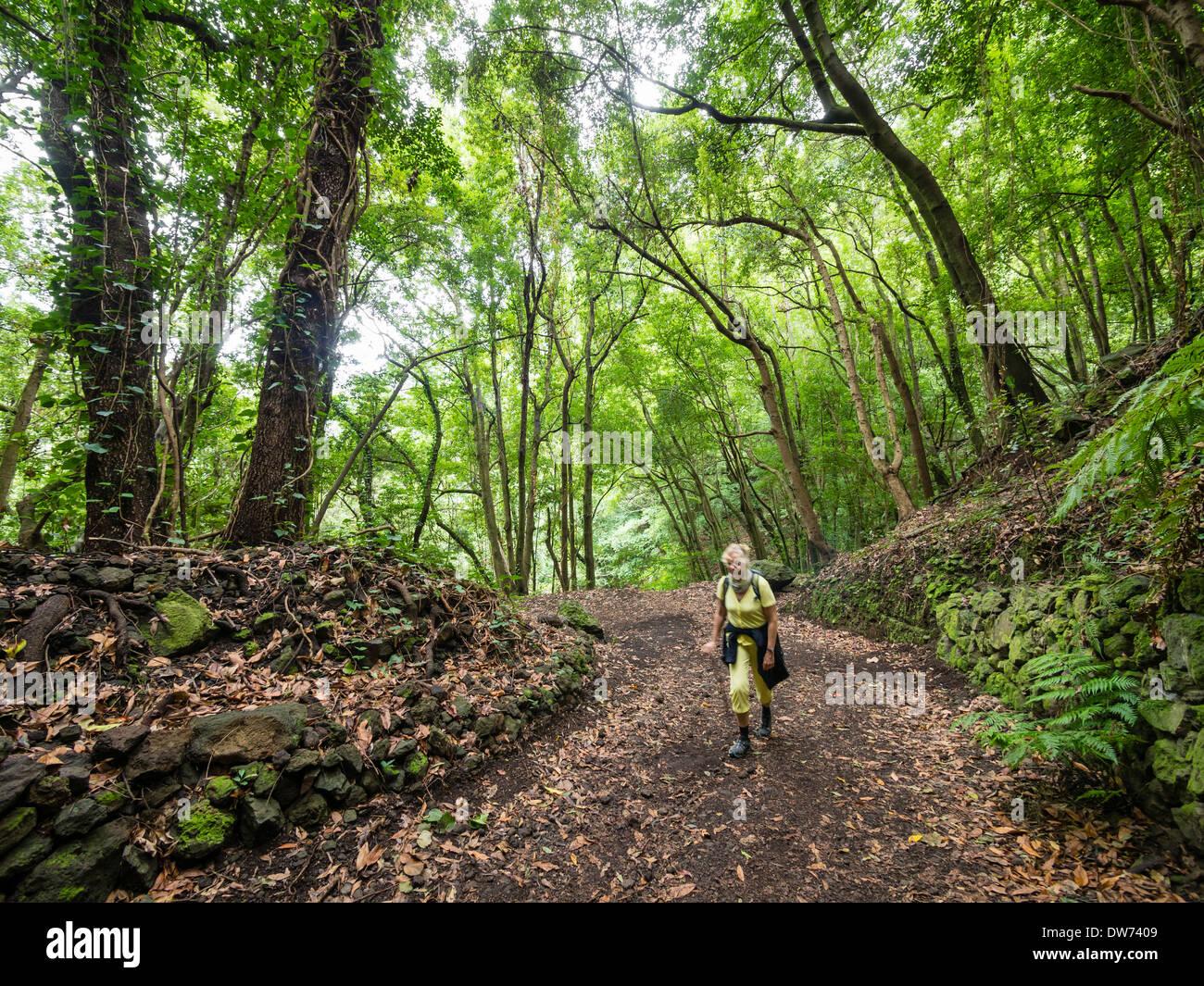 Ein weiblicher Touristen Wanderungen auf einen Wanderweg in den Laurel Wald Los Tiles / Los Tilos auf der Kanareninsel La Palma Stockbild
