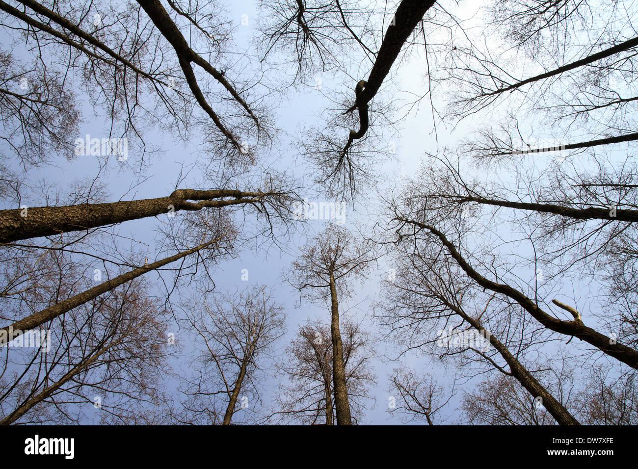 Bäume gegen blauen Himmel Stockbild