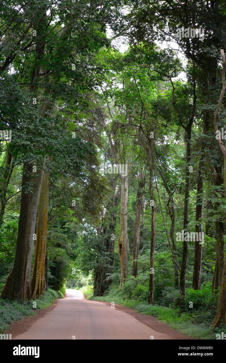 Mount Selinda Afro-Bergwald im östlichen Hochland von Simbabwe in Zentralafrika. Stockbild
