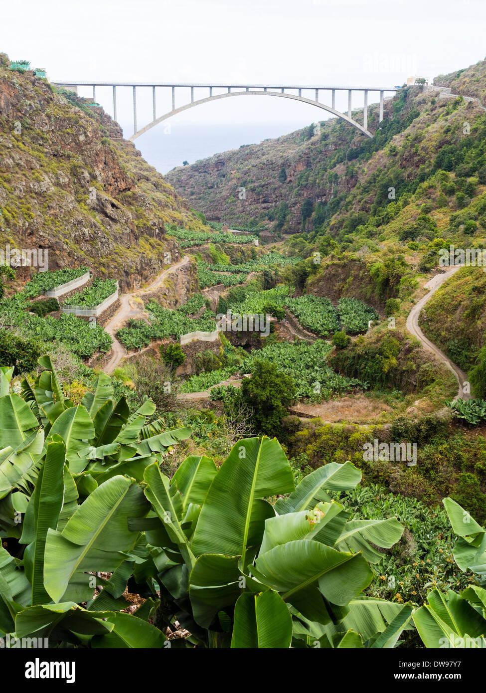 Bananen wachsen im Barranco del Agua Tal auf der Kanarischen Insel La Palma, durchzogen von der Brücke Puente Stockbild