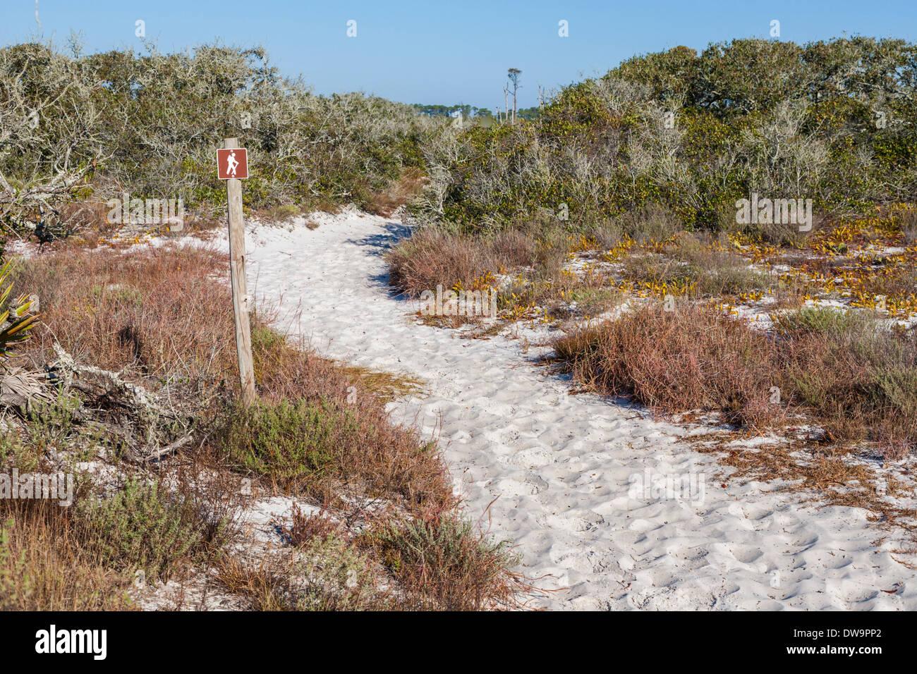 Kiefer-Zweig Wanderweg in Bon Secour National Wildlife Refuge Winde zwischen Sanddünen am Strand von Gulf Shores, AL Stockbild