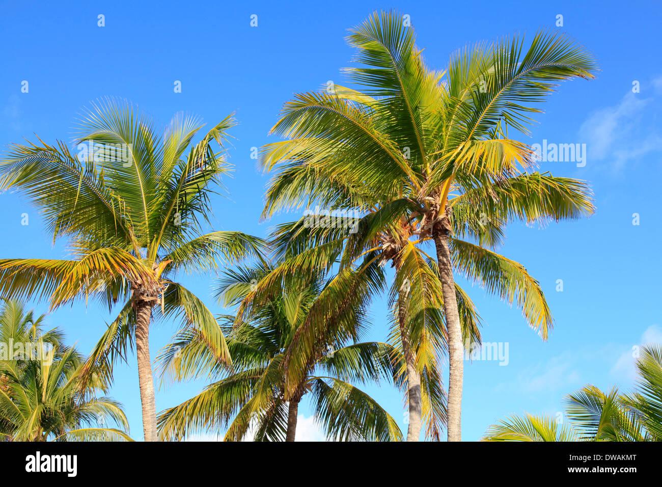 Palmen in Mami Beach, Florida, USA Stockbild