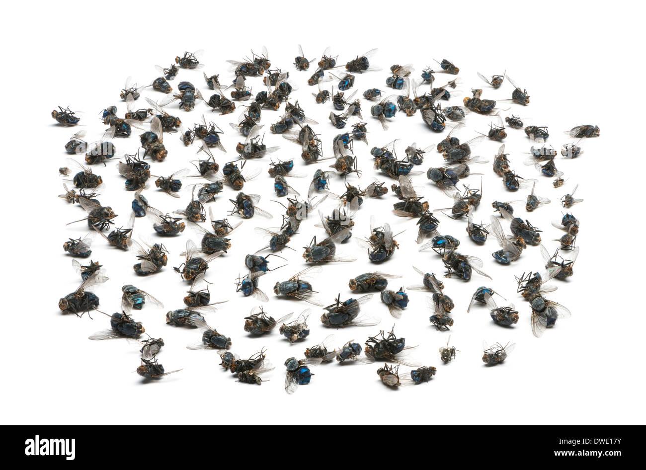 Gruppe von toten Fliegen vor weißem Hintergrund Stockbild